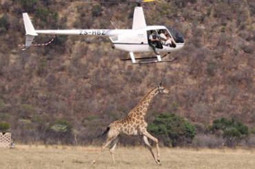 Wildlife Capture with Darts